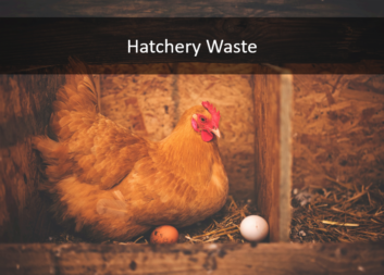 Hatchery Waste